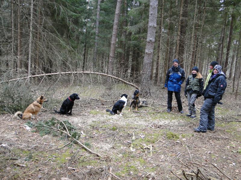 Gehorsam im Wald und in der Gruppe